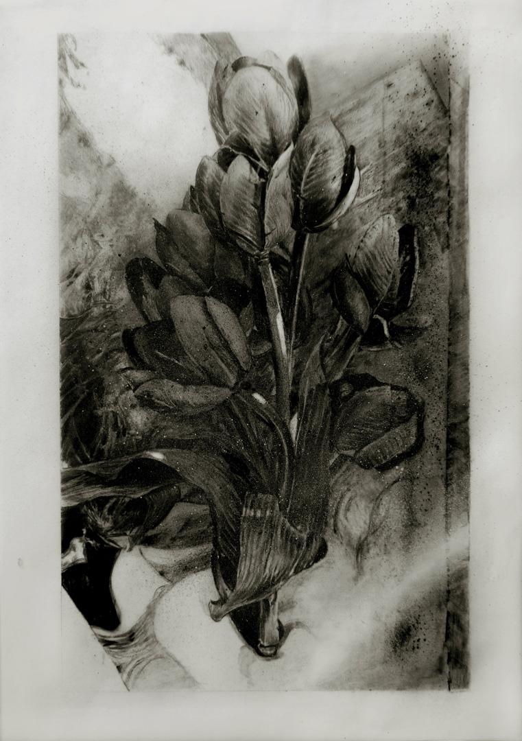 Mireille Blanc, Bouquet, 2014